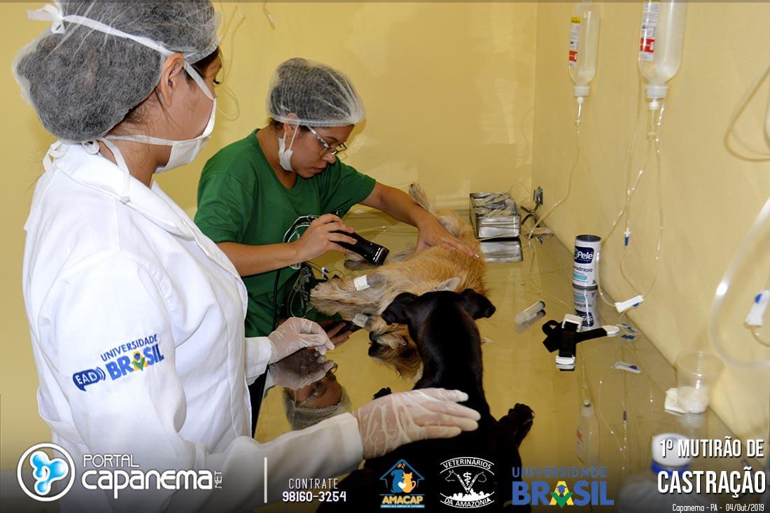 MUTIRÃO DE CASTRAÇÃO UNIVERSIDADE BRASIL 2